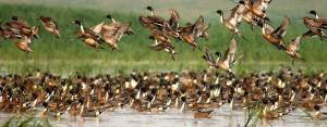 Birds at Chandubi Lake in Assam