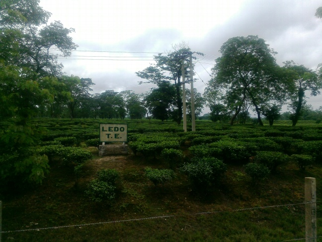 Tea Tours in Assam, Sustainable Tourism North East India, Eco tourism Homestay in Assam, Tribes and Festival of Assam and North East India