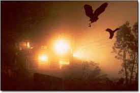 Bermuda Triangle of India, Birds Suicide, Amazing Assam, Jatinga Bird Suicide