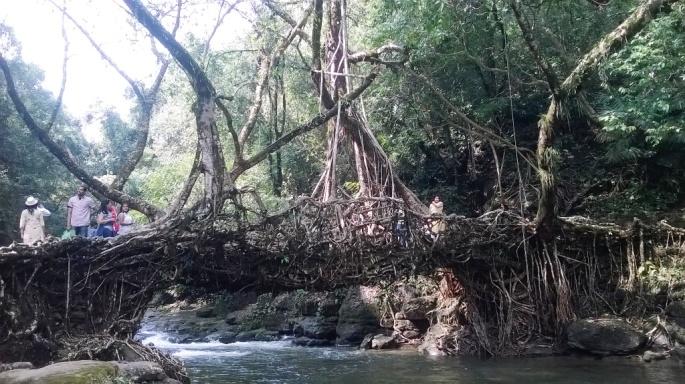 Mawlynnong Meghalaya, Living Root Bridges Mawlyyong, Homestay Meghalaya, Cherrapunjee Caves, Waterfalls Meghalaya