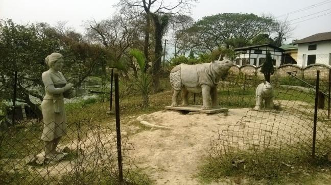 Pobitora Sanctuary Rhino, Mayong Black Magic, Kaziranga National Park Rhino, Jeep Safari Rhino, Elephant Safari Rhino