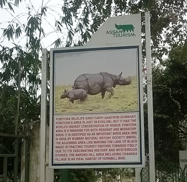 Pobitora Sanctuary Rhino, Mayong Black Magic, Kaziranga National Park Rhino, Jeep Safari Rhino, Elephant Safari Rhino