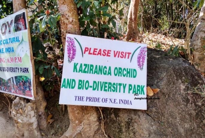 Kaziranga National Park, Kaziranga Orchid Park, Orchids Assam, Assam Tourism