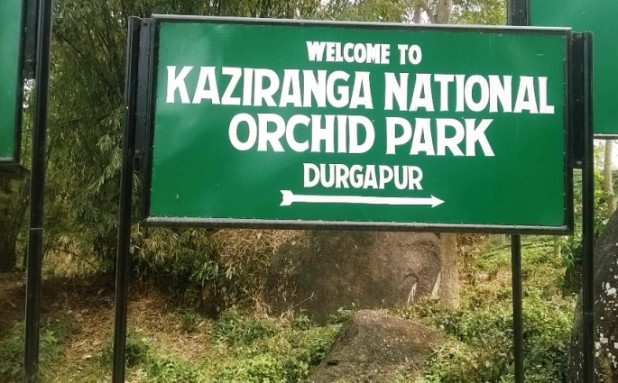 Kaziranga Orchid Park, One Horned Rhinoceros Kaziranga, Kaziranga National Park Assam, IORA resort Kaziranga
