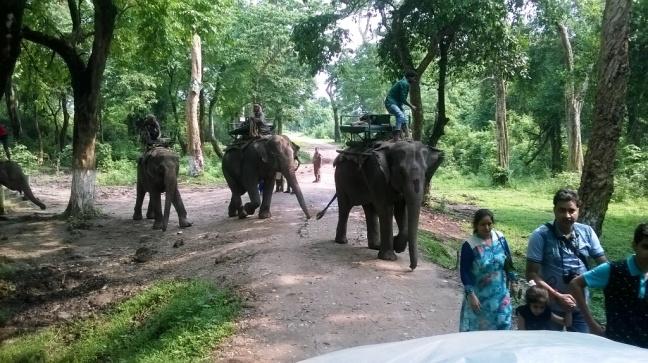 Kaziranga Orchid Park, One Horned Rhinoceros Kaziranga, Kaziranga National Park Assam, IORA resort Kaziranga